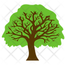 Round Tree Forest Icon