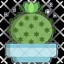 Old Lady Cactus Cactus Pot Cactus Plant Icon