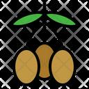 Olive Fruit Organic Icon