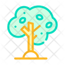 Olive Tree Color Icon