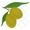 Olive Branch Leaf Icon