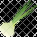 Onion Food Greenery Icon