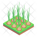 Onion Agriculture Onion Crops Onion Harvesting Icon