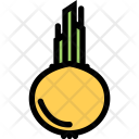 Onion Vegetables Fruit Icon