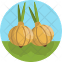 Onions Onion Food Icon