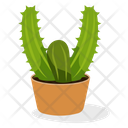 Indoor Plant Ornamental Plant Houseplant Decoration Icon