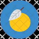 Orange Citrus Healthy Icon