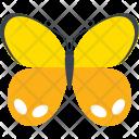 Orange Ringlet Insect Icon