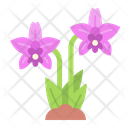 Orchid Flower Orchid Flower Icon