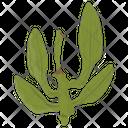 Variegata Tree Vegetable Icon