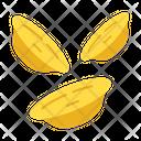 Orecchiette Icon