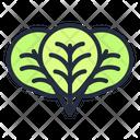 Oregano Vegetable Healthy Icon