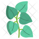 Oregano Herbal Spices Icon