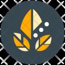 Organic Leaf Icon