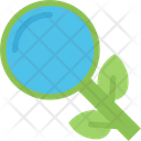 Organic Search Search Research Icon