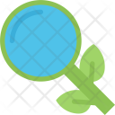 Organic Search Analysis Icon