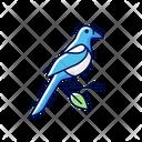 Oriental Magpie Bird Icon
