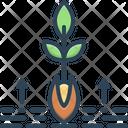 Origin Root Grow Icon