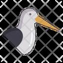 Oystercatcher Icon