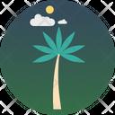Palm Tree Palm Coconut Tree Icon