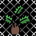 Palm Tree Pot Icon