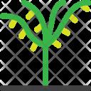 Palm Ecology Garden Icon