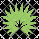 Palmetto Leaf Icon