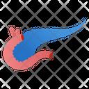 Pancreas Organ Icon