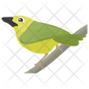 Parrot Bird Feather Creature Icon