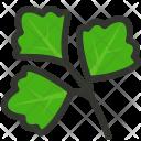 Parsley Herb Cilantro Icon