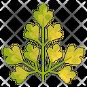 Parsley Vegtable Healthy Icon