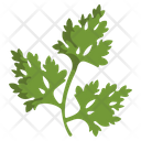 Parsley Herbal Spices Icon