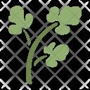 Parsley Vegetable Healthy Icon