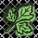 Leaf Parsley Plant Icon