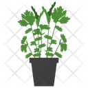 Parsley Potted Plant Icon