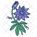 Passion Flower Blossom Icon