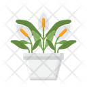 Peace Lily Indoor Plant Peace Lily Plant Icon