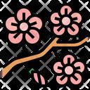 Peach Blossom Icon