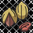 Pecan Food Nut Icon