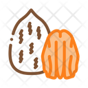 Pecan Nut Food Icon