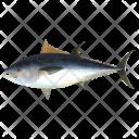 Pelagic Fish Sea Icon