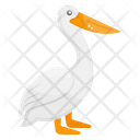 Pelican Pelecanus Sea Creature Icon