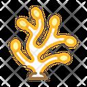 Pelvetia Icon
