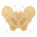 Pelvic Bone Icon