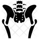 Pelvis Skeleton Icon