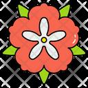 Peony Flower Icon