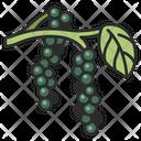 Pepper Food Organic Icon