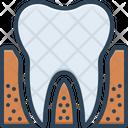 Periodontics Dental Teeth Icon