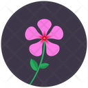 Periwinkle Blossom Flower Icon