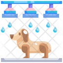 Pet Washing Icon